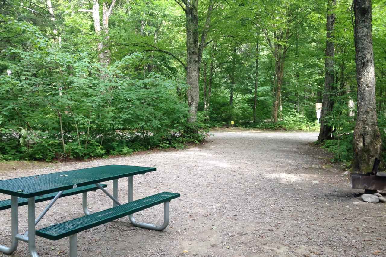 Are Dogs Allowed In Jacques Cartier Park